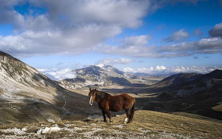 Wilder Mind fotografia di Alessandro Passerini Un TPR (cavallo agricolo italiano da tiro pesante rapido) allo stato brado perso sui monti del Piccolo Tibet, in Abruzzo.