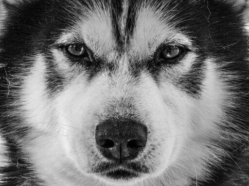 Black and white terror