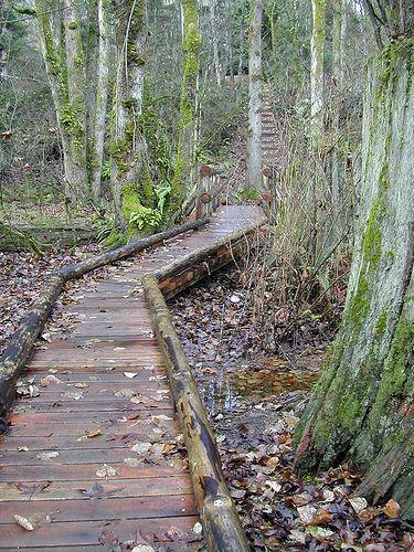 Wooden Walkway Over Pond Through Woods