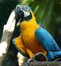 Singapore Jurong Bird Park Tour