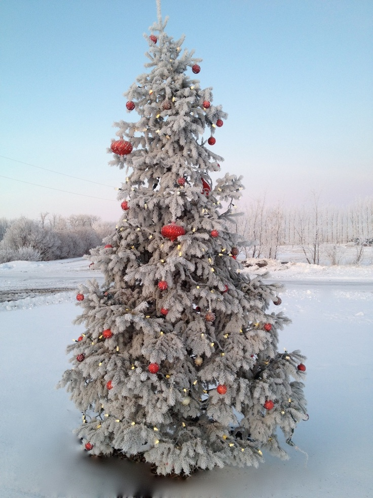 Christmas Trees By Robert Frost Part - 30: Hoar Frost