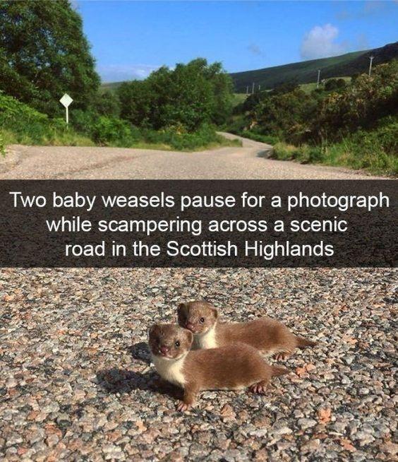 21 gesunde Meme für eine wundervolle Woche   – Tiere Bilder