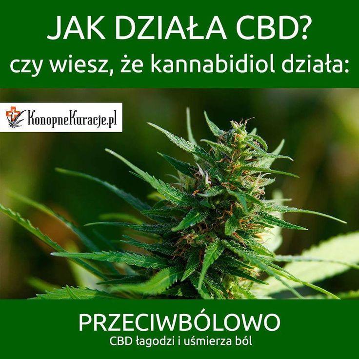 Jak działa CBD?  Czy wiesz, że kannabidiol działa: Przeciwbólowo. CBD łagodzi i uśmierza ból.  #cbd #olejkicbd #olejekcbd #olejcbd #konopie #konopnekuracje #konsultacje #zdrowie #warszawa #polska