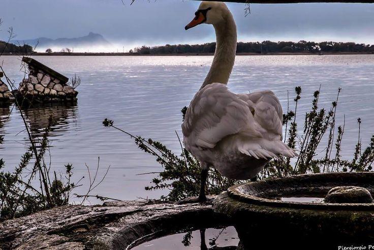 Lago di Fogliano A Latina