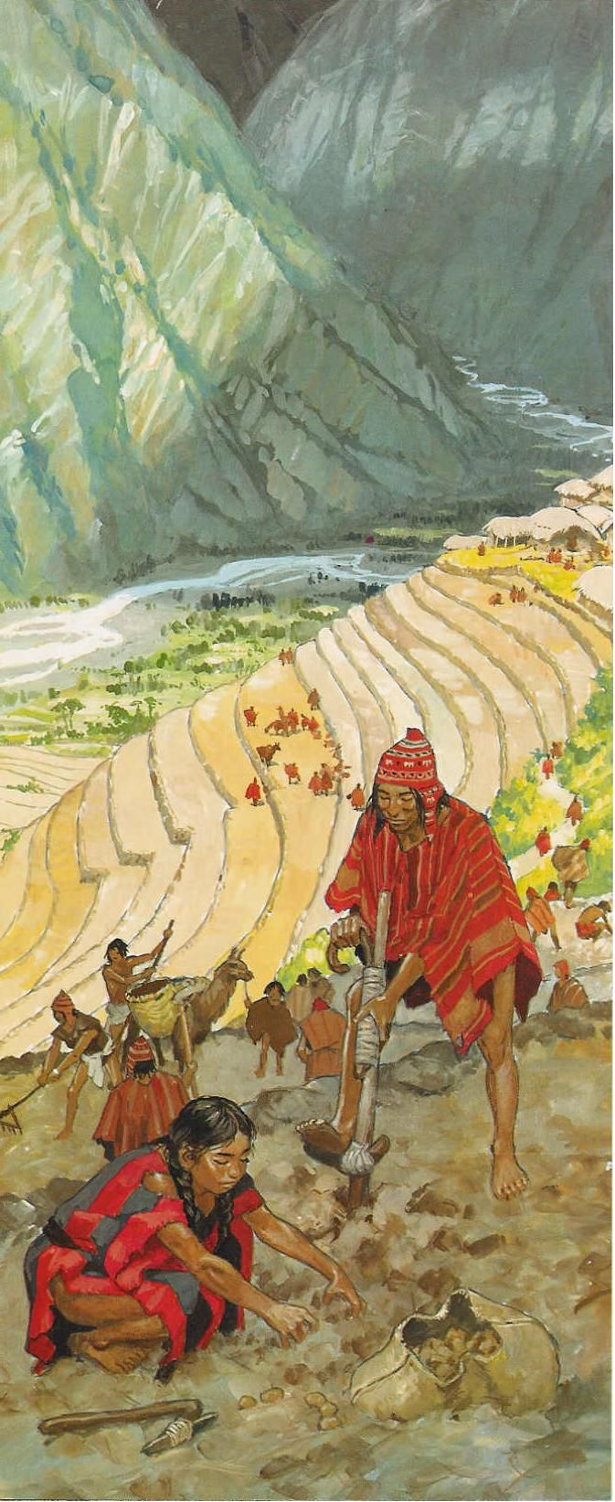 Incan terraces. After building the terrace's shape, the Incas then constructed systems of canals and aqueducts to provide the terraces with constant water, increasing the land's fertility. The ancient Incan's terracing techniques were so successful that modern Peruvian farmers still employ them in their farms today.