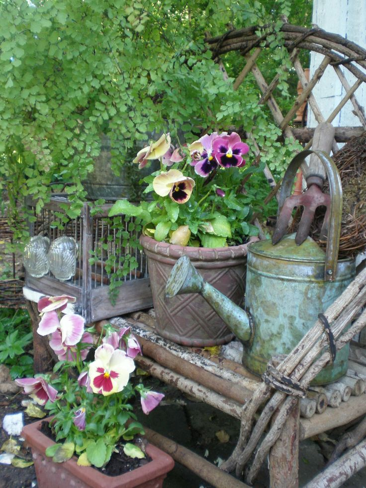 Pansies with old wicker, vintage watering cans and a birdhouse