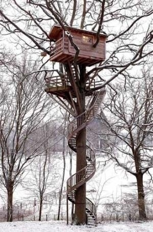 Spiral staircase to tree house