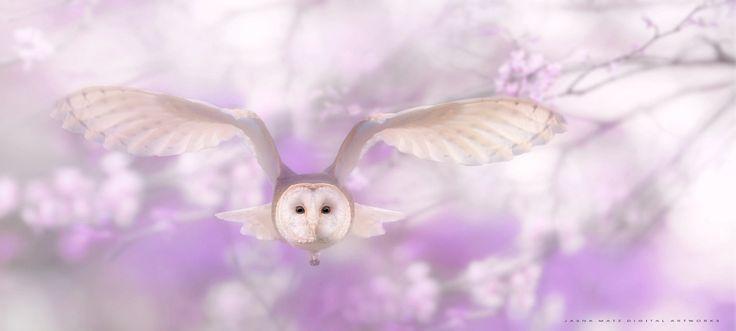 ~ Spring beauty ~, автор — Jasna Matz на 500px.com