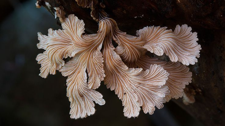 Photographer Steve Axford (previously) continues his quest to document some of the world's most obscure fungi found in locations around Australia. Axford lives and works in the Northern Rivers area of New South Wales in Australia where he often has to travel no further than his own back yard to make