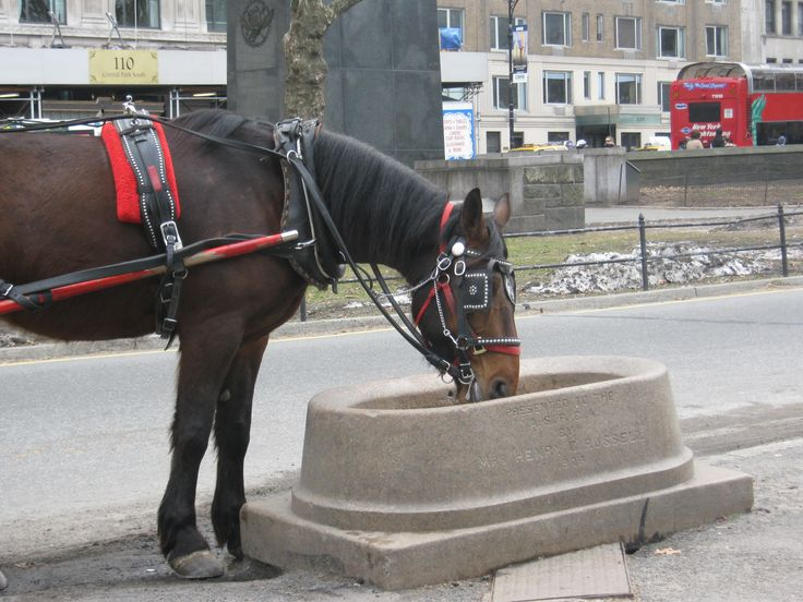 Carriage horse.