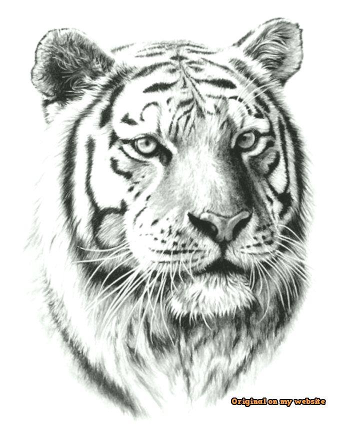 Tiger Ausmalbilder Ausmalbilder Fur Kinder 6