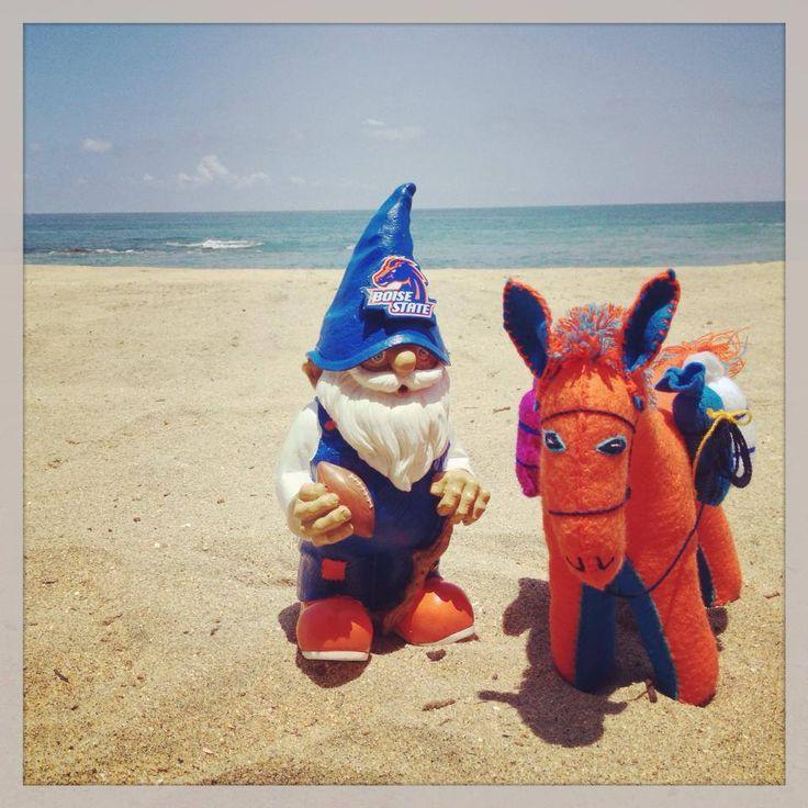 Our gnome found a friendly orange and blue burro on a Sayulita beach in Nayarit, Mexico. ¡Viva los Broncos!   #BoiseState #Gnome #GoBroncos