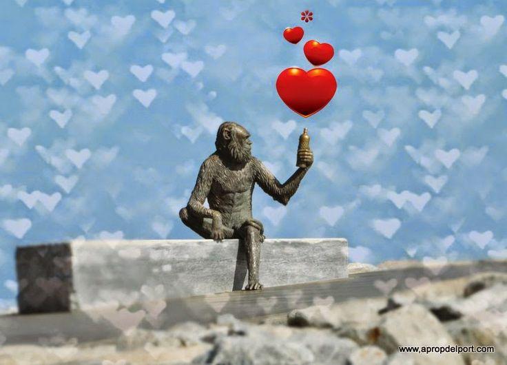 Monkeys in Love. Casament del mico de l'Anís del Mono i la ximpanzé Micaela a Badalona