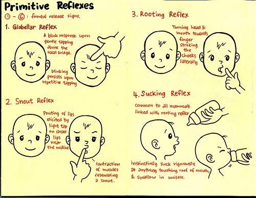 Primitive reflexes Part 1 of 3