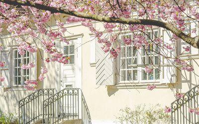Scarica sfondi portico, ringhiere in ferro battuto, interni, fiori di ciliegio