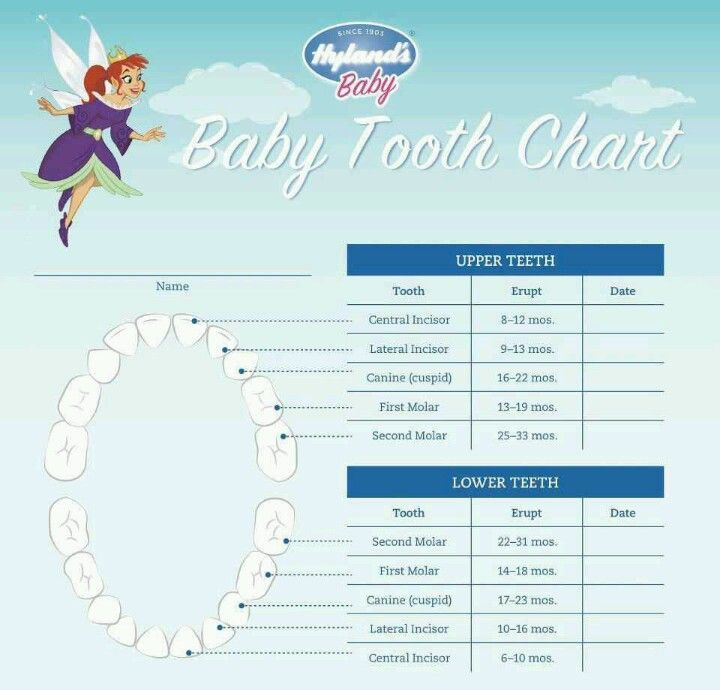 baby teething chart