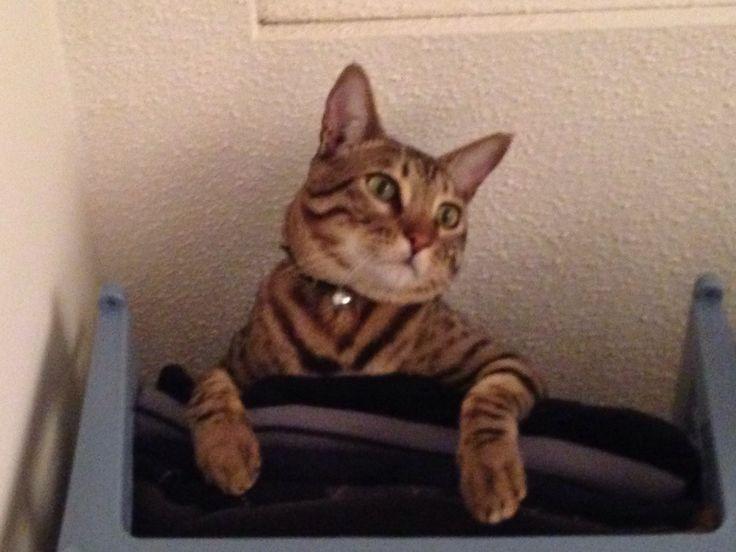 Kitty in closet