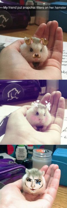 This #Hamster Was Born to #Snapchat http://ibeebz.com