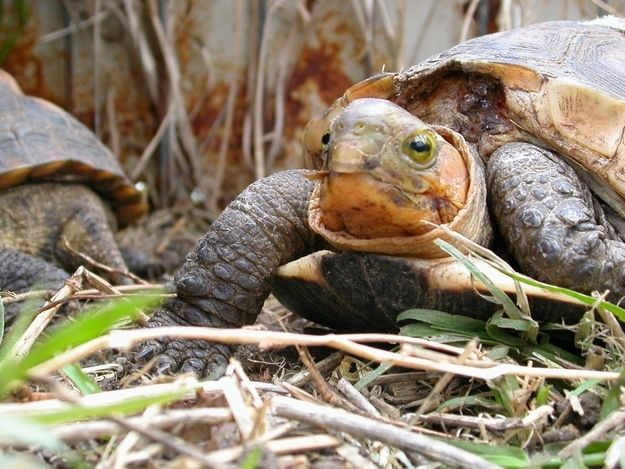 20 Turtles Celebrate World Turtle Day