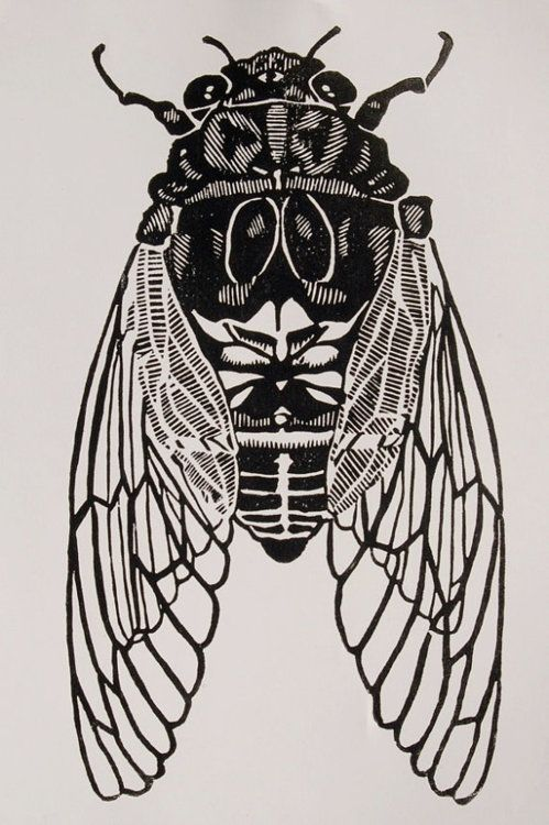 This cicada print by christopherwassell on Etsy is so cool!