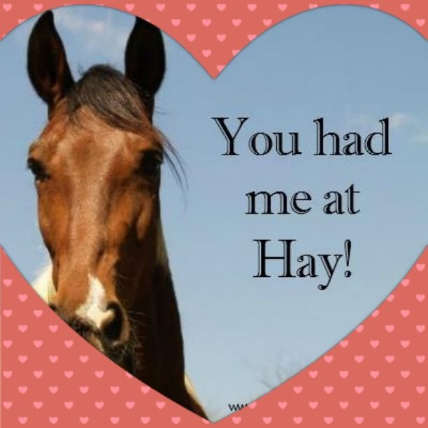 49 best Be Mine images – Horse Valentines Day Cards