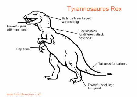 Kids Dinosaur T Rex information - its size, skeleton, coloring pages and more.