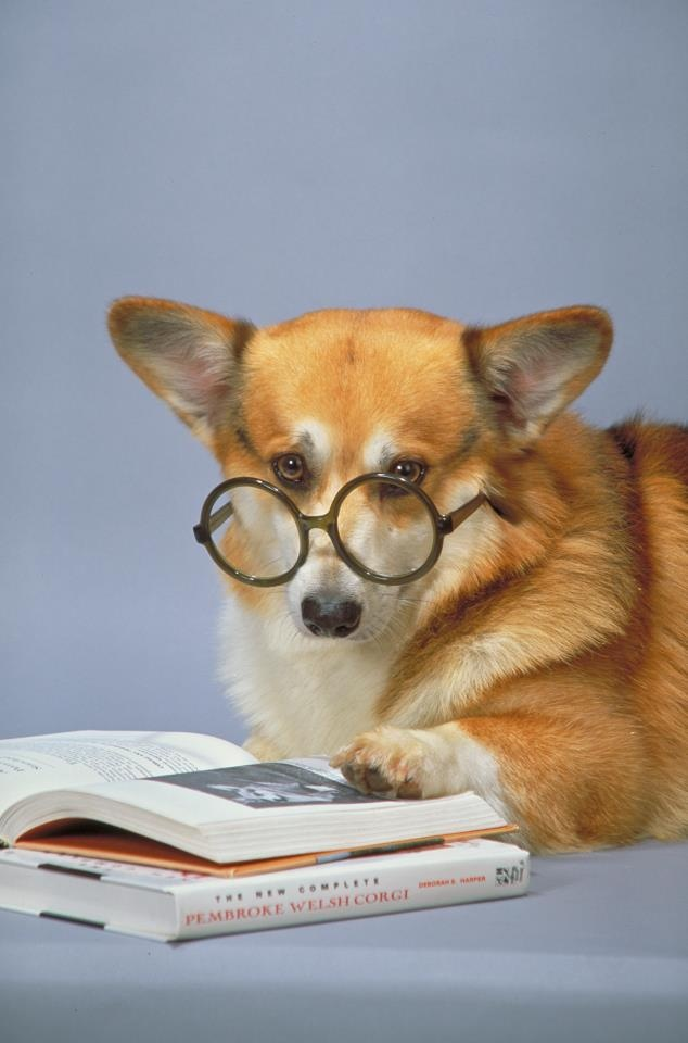 73 best Corgis with Books and Computers images on ...