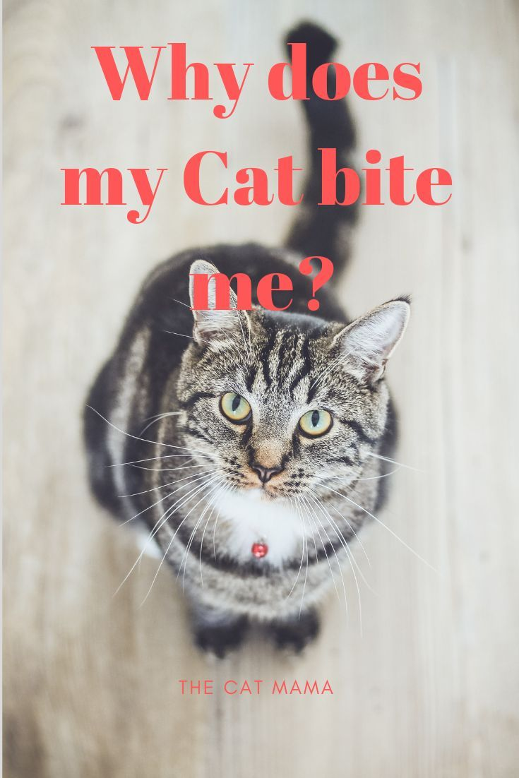 Do Cats Give Love Bites What Does It Mean When Your Cat Bites You In 2020 Cat Biting Cat Behavior Problems Cats