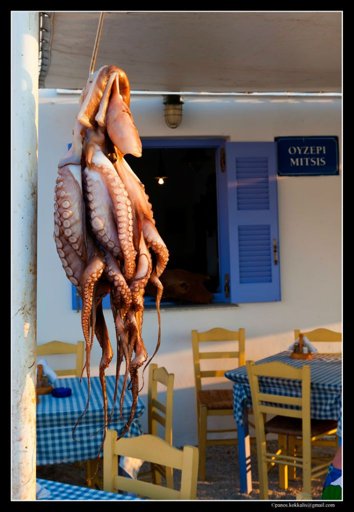 Squid Paros  Greece