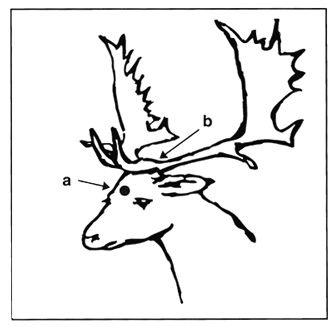 Antlers besides 416512665512538743 in addition Stock Vector Illustration With Set Of Antler And Horns Isolated On White Background besides Stock Vector Set Of Antlers Silhouette Vector likewise String Art. on deer antler project