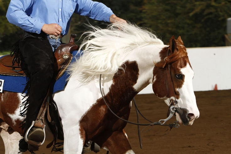 Docs Smokin Apache who is daddy to our two American Paint Horses