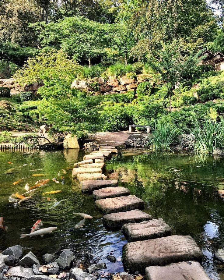 #garden #japanesegarden #kaiserslautern #lautern #garten #japan #koi  #fische #pond #teich #gardening #littleparau2026 | Pinterest