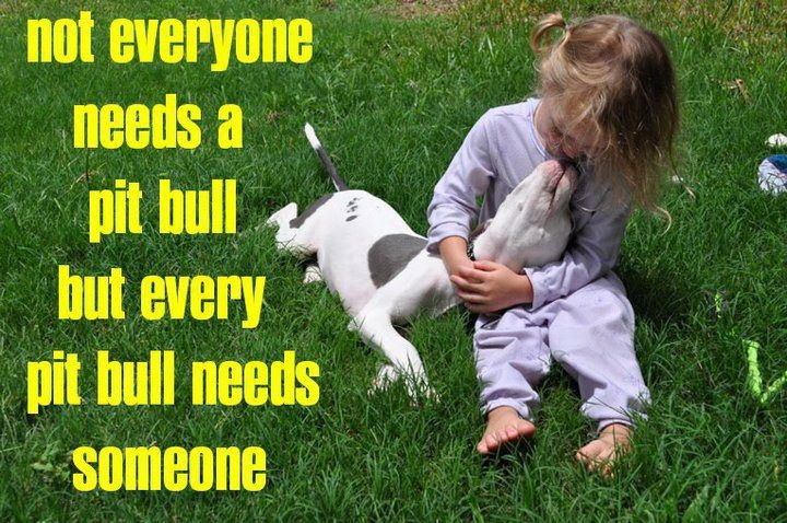how to raise a sweet pitbull