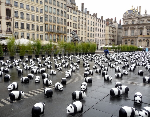 Despite being one of the most popular animals in the world, pandas are threatened by unsustainable development and loss of habitat. An estimated 1,600 giant pandas remain in the wild today, demonstrated by this graphic display by the World Wildlife Federation in Lyon a few years ago.