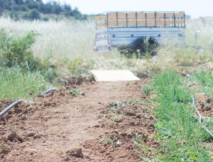 Tzekos Organic Herbs | our land