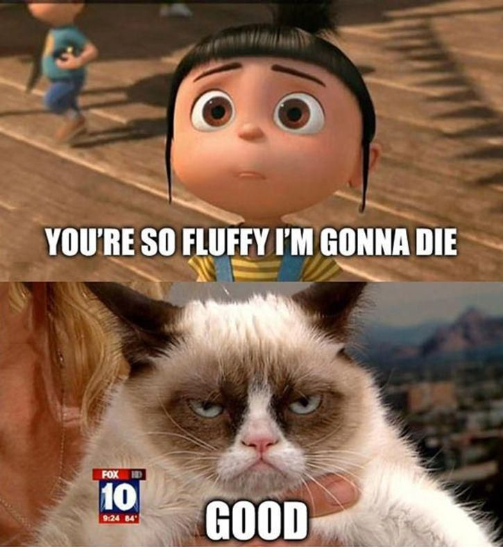 Grumpy Cat's little face never gets old.