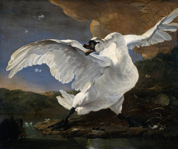 My favorite painting of the Dutch Golden Age. The painting represents political discussions of the time. 'The Threatened Swan' by Jan Asselijn c.1640  Jan Asselijn [Dutch Golden Age painter 1610- 1652] c.1640    This painting of a swan defending its nest became a symbol of Dutch national resistance