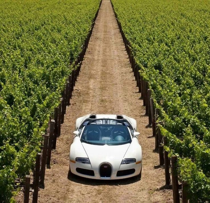 2010 Bugatti Veyron 16 4 Grand Sport In Napa Valley Front Top