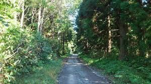 海沿いの林道