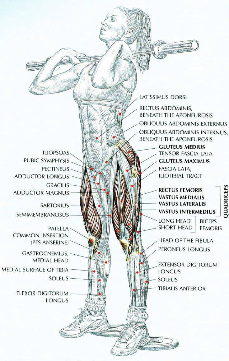 Women's strength training anatomy http://kmelot.biblioteca.udc.es/record=b1401312~S12*gag