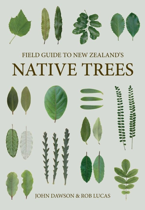 Field Guide to New Zealand's Native Trees  John Dawson & Rob Lucas
