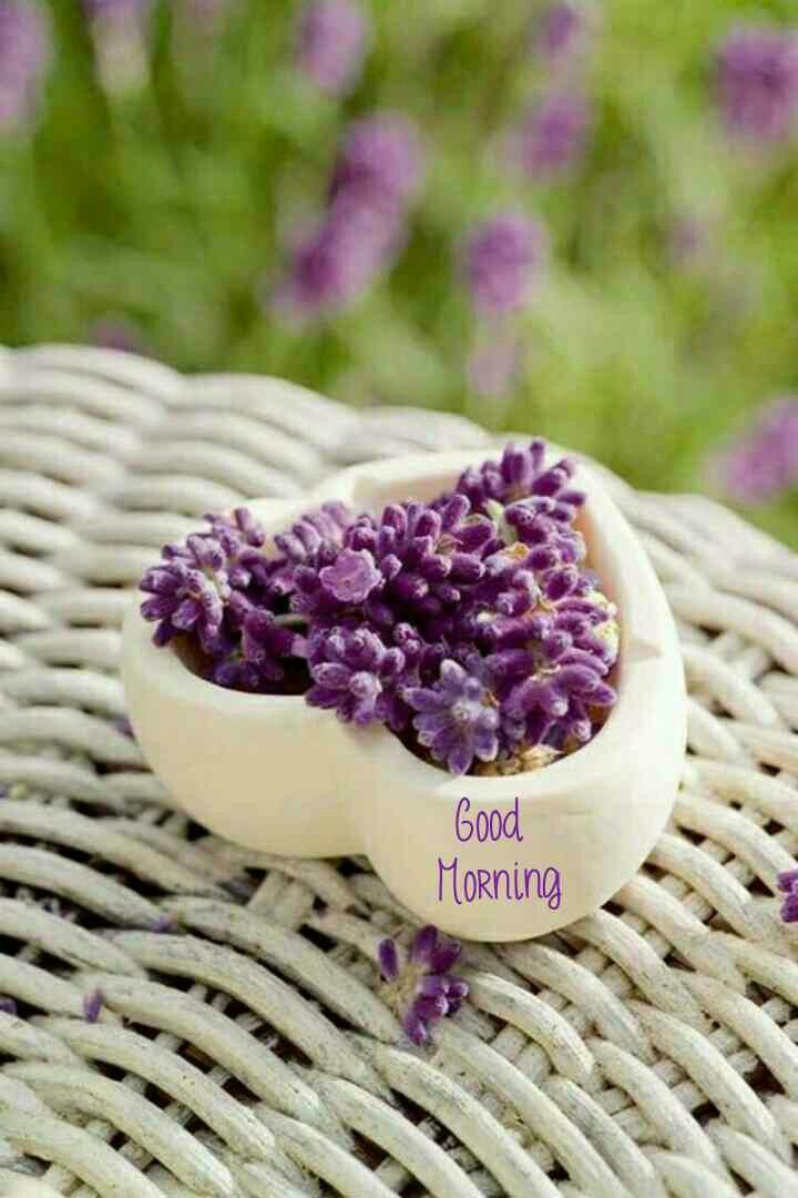 Good Morning In 2020 Raindrops And Roses Lovely Lavender Lavender Cottage