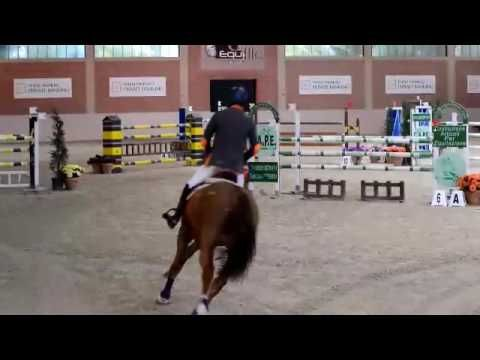 Holsteiner Jumper for Sale: Lincon Park E.H. by Lordanos x Cassini II - ...
