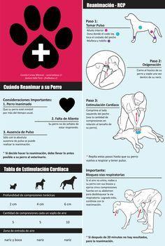 Aquí tienes unos consejos útiles de Primeros Auxilios para Perros. ¡Tu ayuda puede salvar una vida!