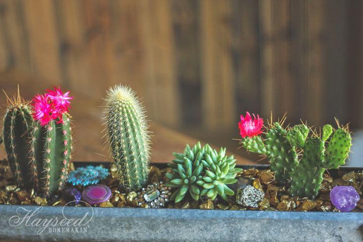 21 best cool low maintenance house plants images on for Cool low maintenance plants
