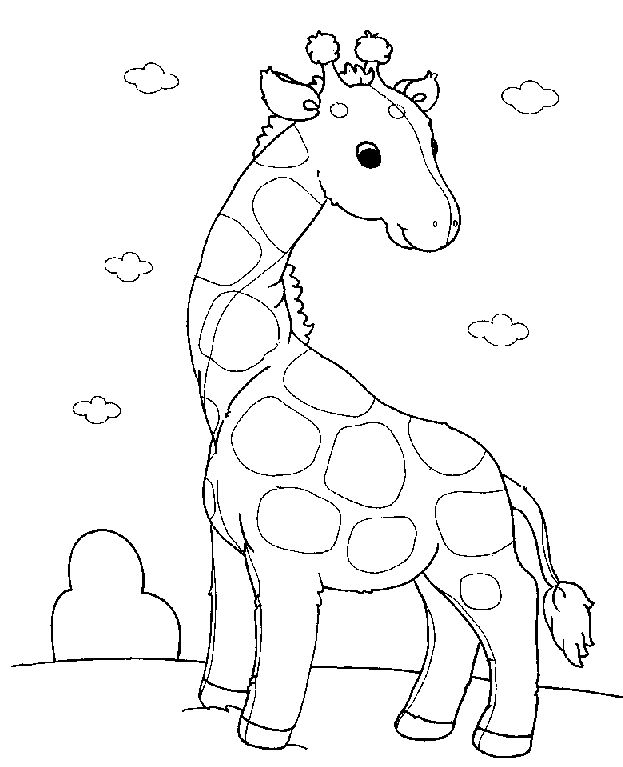 Best 25 Baby Giraffe Pictures Ideas Only On Pinterest Giraffe - cartoon giraffe coloring pages