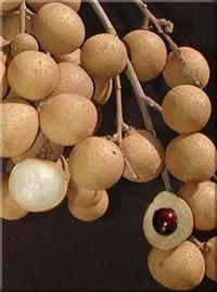 Longan fruit , my favorite exotic fruit