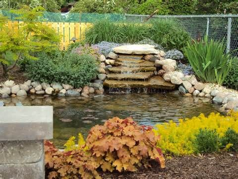 51 best images about building a backyard pond with florida for Koi pool water gardens thornton