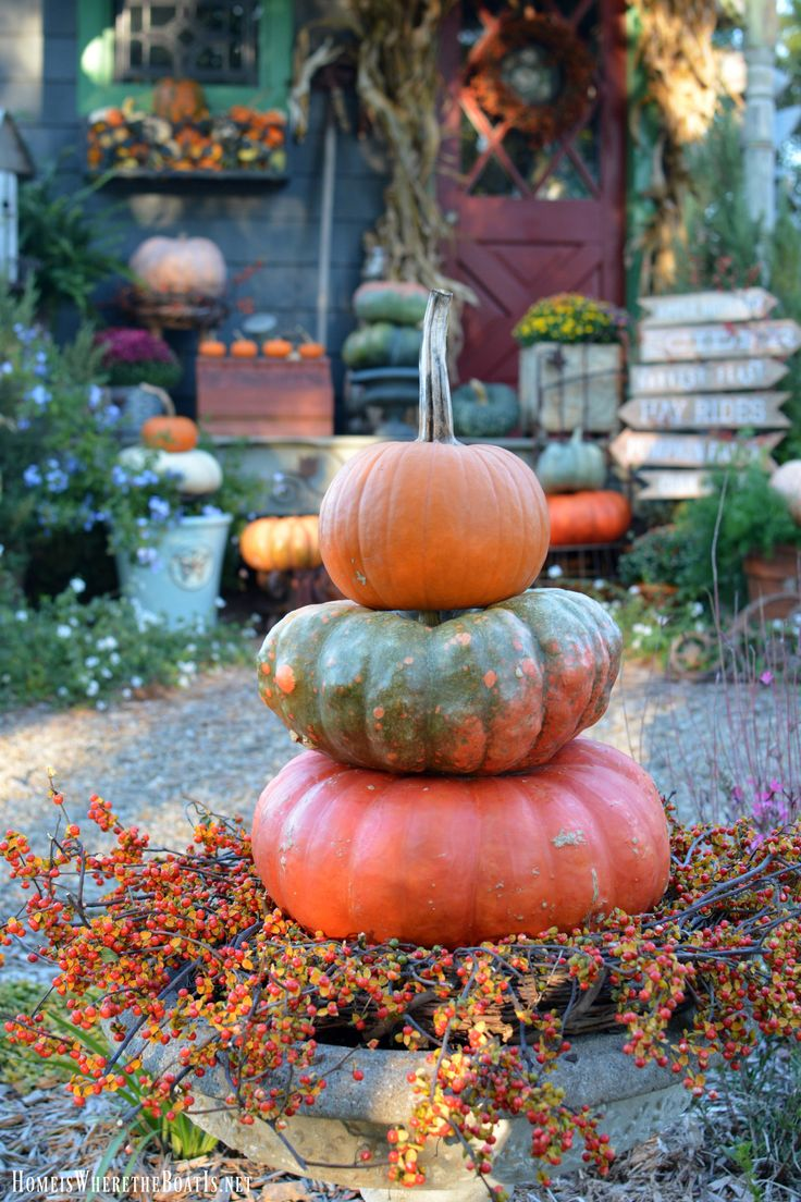Wish i could find or buy bittersweet branches in our area don t - Potting Shed Decorated For Fall With Pumpkins Mums Bittersweet Vine And Corn Stalks