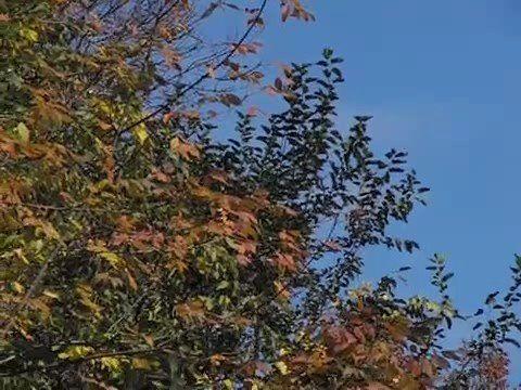 Slow Motion Leaf Falling